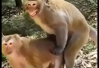 Funny animal hindi sex video